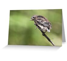 Grey Fantail fledgling ~ End of the line Greeting Card