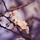 Soft side of Spring I by CarlaSophia