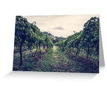A Vineyard Greeting Card