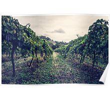 A Vineyard Poster