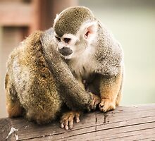 Two Lovely Squirrel Monkeys by Ben Frewin