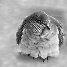 Cold by Eileen McVey