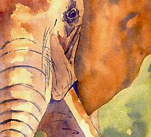 Elephant Portrait by klimse