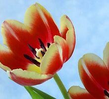 Springtime Tulips. by Terence Davis