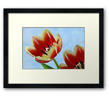 Springtime Tulips. Framed Print