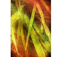 Rainbow Blades Photographic Print