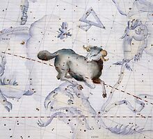 Constellation of Aries by Bridgeman Art Library