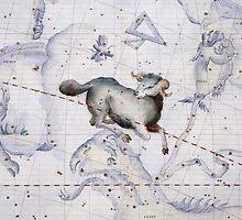 Constellation of Aries by Bridgeman Art Library