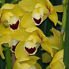 Laughing Orchids by autumnwind