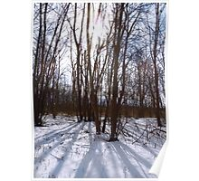 Wintertime At Sheldon Marsh - Sunlit Trees Poster