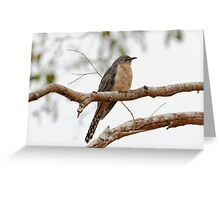 Fan-tailed Cuckoo (Cacomantis Flabelliformis) Greeting Card