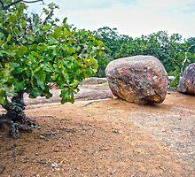 Elephant Rocks State Park  by Susan S. Kline