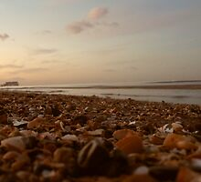 Sea shells at sunset by Emily Sparkes