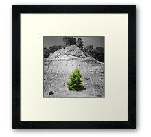 tree1.1 Framed Print
