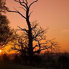 Sunset Trees by Martina Fagan