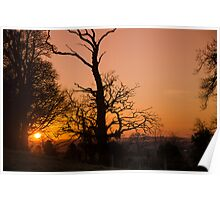 Sunset Trees Poster