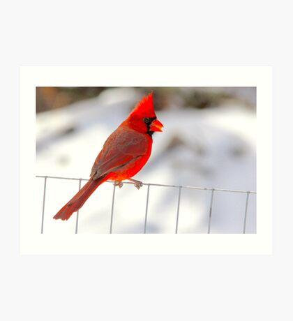 I'm Really Not An Angry Bird Art Print