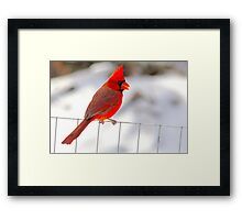 I'm Really Not An Angry Bird Framed Print