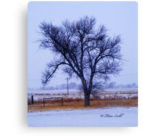 January Chill Canvas Print