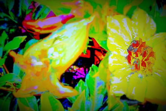 Tropical view of Allamanda flowers by ?? B. Randi Bailey
