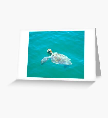 Turtle At Monkey Mia Greeting Card