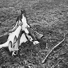 Winter Stump by Michael  Herrfurth