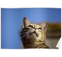 Feline inspiration Poster