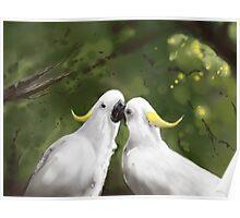 Cockatoo Love  Poster