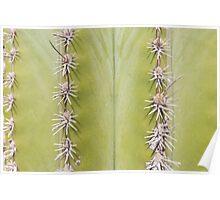 Green Cactus closeup - nature macro Poster