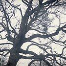 tree by Barbara Fischer