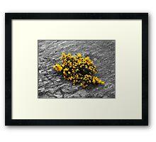 Robert Framed Print