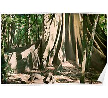 The Magnificent Strangler Fig Tree Poster