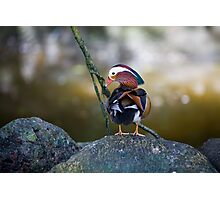 spectacular sentinel By Ken Killeen Photographic Print