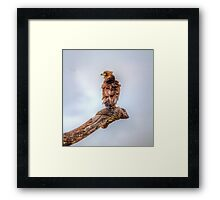 Who ruffled your feathers? Framed Print