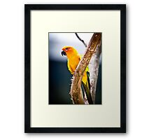 avian vibration By Ken Killeen Framed Print