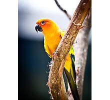 avian vibration By Ken Killeen Photographic Print