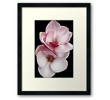 tulip magnolia twins (black bg) Framed Print