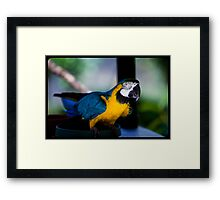 graceful greeting By Ken Killeen Framed Print
