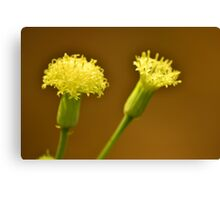 Macro of Yellow Flowers  Canvas Print