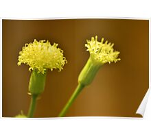 Macro of Yellow Flowers  Poster