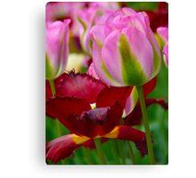 2 Tulips Canvas Print