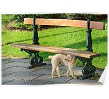 Dog waiting in parc Poster