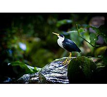 avian pride By Ken Killeen Photographic Print