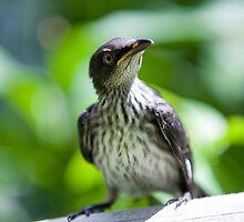 startled starling By Ken Killeen by KenKilleen