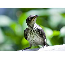 startled starling By Ken Killeen Photographic Print