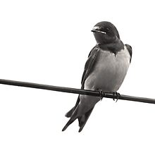 Bird on a wire by Furtographic