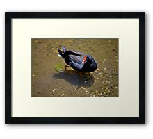 polite courtesy By Ken Killeen  Framed Print