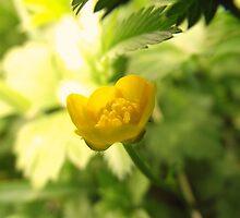 Buttercup by modquokka