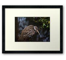 Mystery Bird Framed Print