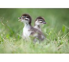 duckling song By Ken Killeen Photographic Print